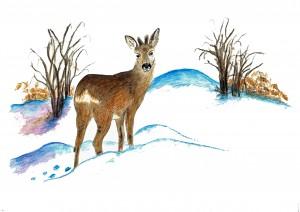 N°09 Le chevreuil en hiver