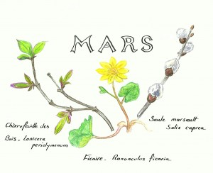 FF DESSIN DE MARS